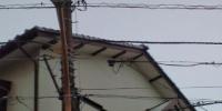 20110626091514.jpg